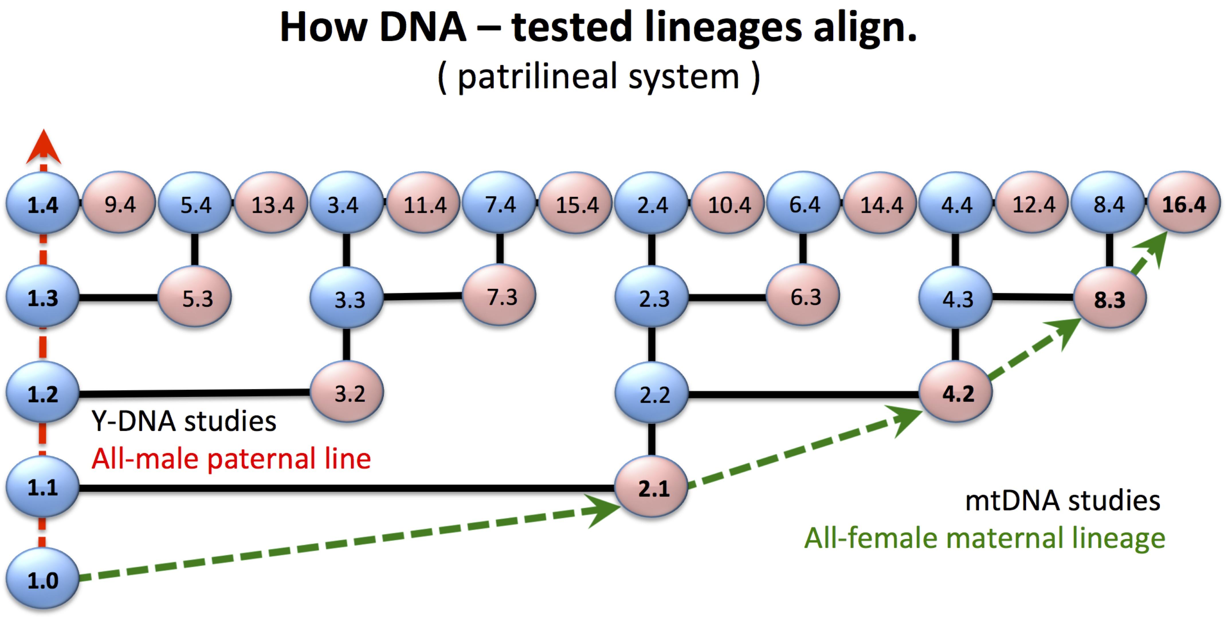 HowDNA-testedLineagesAlign